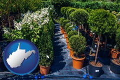 west-virginia shrubs and trees at a nursery
