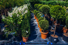 shrubs and trees at a nursery
