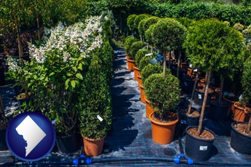 shrubs and trees at a nursery - with Washington, DC icon