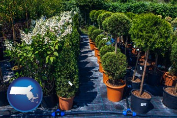 shrubs and trees at a nursery - with Massachusetts icon