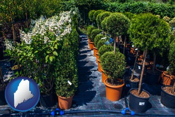 shrubs and trees at a nursery - with Maine icon
