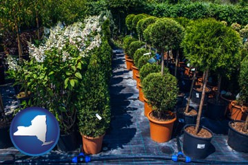 shrubs and trees at a nursery - with New York icon