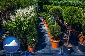 shrubs and trees at a nursery - with Virginia icon